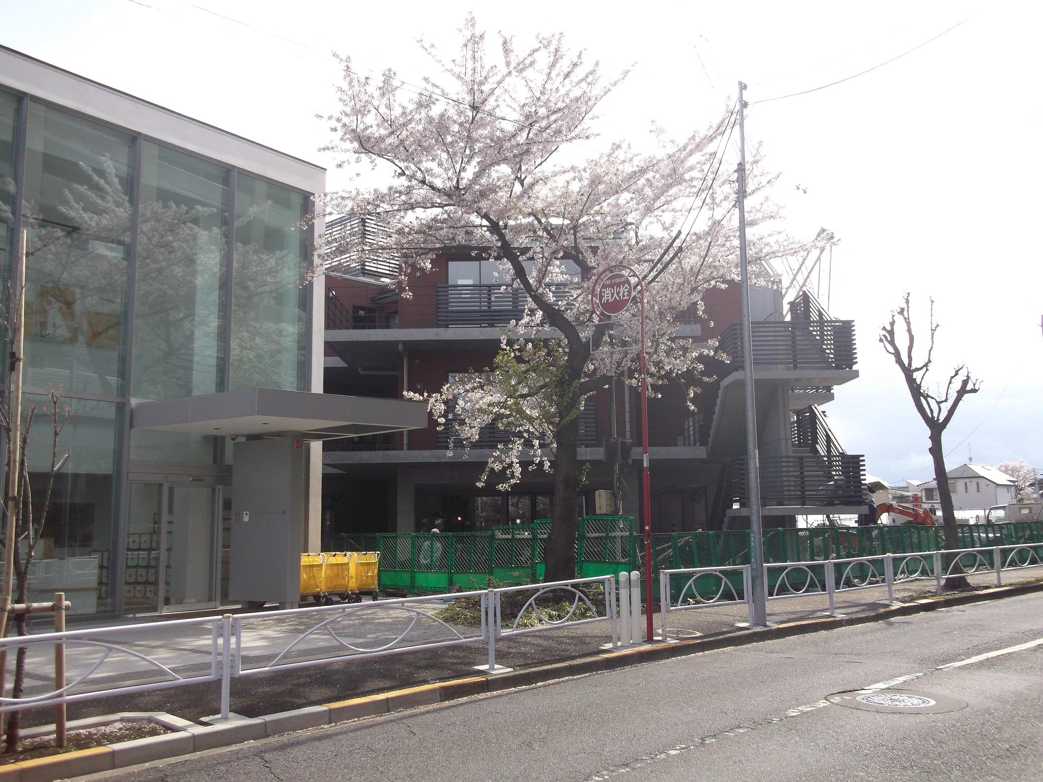 保育園前反対側から建物北東側を撮影